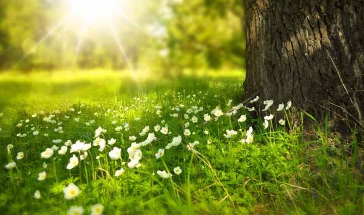 sunlit meadow of white flowers